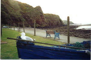 Photograph of the seaview form the cottage front door over the old boat with seagull sitting on it